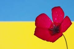 Bandera roja a de la flor fotografía de archivo