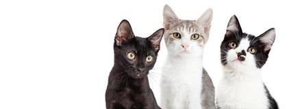 Bandera social de tres gatitos junto medios Fotografía de archivo libre de regalías