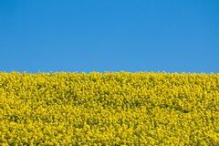 Bandera ucraniana fotos de archivo