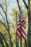 Bandera y árboles Imagenes de archivo