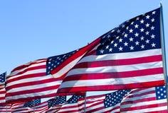 Banderas americanas en un campo Fotografía de archivo libre de regalías