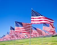 Banderas americanas en un campo Fotos de archivo