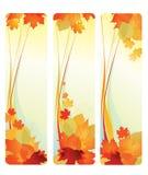Banderas con las hojas. Foto de archivo libre de regalías