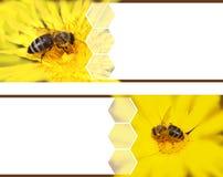 Banderas de la abeja Foto de archivo