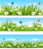 Banderas de la naturaleza con la hierba verde y las flores del cielo azul libre illustration