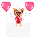 Banderas del día de fiesta con los globos y el perro Imagenes de archivo