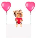 Banderas del día de fiesta con los globos y el perro Foto de archivo libre de regalías