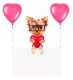 Banderas del día de fiesta con los globos y el perro Imágenes de archivo libres de regalías