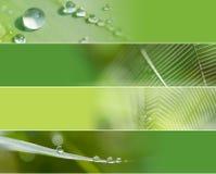Banderas del web de araña del agua Imagenes de archivo