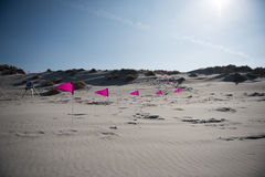 Banderas rosadas en la playa Imagenes de archivo