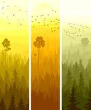 Banderas verticales de la madera conífera de las colinas. Fotos de archivo libres de regalías