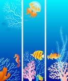 Banderas verticales de la vida de mar Fotografía de archivo