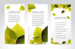 Banderas verticales naturales frescas con las hojas Foto de archivo libre de regalías