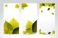 Banderas verticales naturales frescas con las hojas Foto de archivo