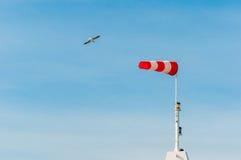 Banderuola orizzontalmente volante del windsock con cielo blu nei precedenti Grandi gabbiani degli uccelli che volano intorno Fotografia Stock Libera da Diritti