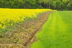 3 bandes : colza, la terre/blé Image stock
