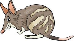 Bandicoot animal cartoon illustration Stock Photos