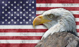 Bandiera americana ed aquila calva Fotografie Stock