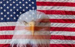 Bandiera americana sempre vigilante ed aquila calva fotografia stock libera da diritti