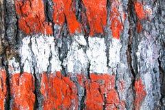 Bandiera austriaca dipinta su un albero nel legno Fotografia Stock Libera da Diritti