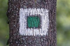 Bandiera bianca quadrata della taglialegna sull'albero Fotografie Stock Libere da Diritti
