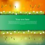 Bandiera con erba ed i fiori Immagine Stock