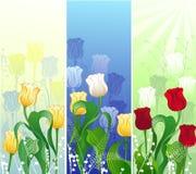 Bandiera con i tulipani Immagini Stock Libere da Diritti