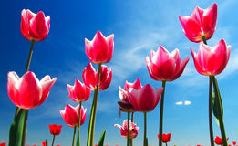Bandiera dei fiori Background Fotografia Stock