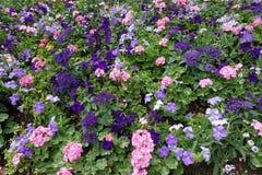 Bandiera dei fiori Background Immagini Stock