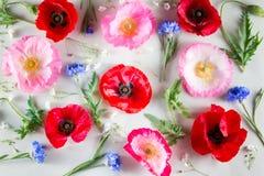 Bandiera dei fiori Background Papavero rosso e rosa e fiordaliso blu su fondo verde chiaro Fotografia Stock