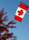 Bandiera del Canada e un albero di acero rosso Fotografia Stock