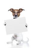 Bandiera del cane Immagini Stock