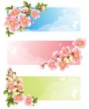 Bandiera del fiore Fotografia Stock