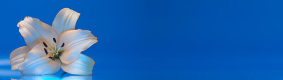 Bandiera del giglio Fotografie Stock