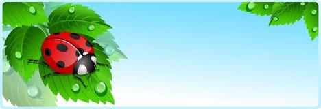 Bandiera del Ladybug Fotografia Stock Libera da Diritti