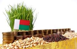 Bandiera del Madagascar che ondeggia con la pila di monete dei soldi ed i mucchi di grano Fotografia Stock Libera da Diritti