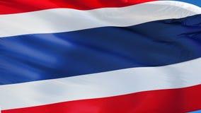 Bandiera della Tailandia al rallentatore senza cuciture avvolta con l'alfa video d archivio