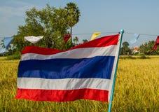 Bandiera della Tailandia con il fondo del giacimento del riso Immagine Stock Libera da Diritti