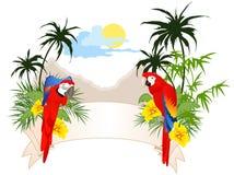Bandiera di estate con i pappagalli illustrazione di stock