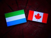 Bandiera di leone di Seirra con la bandiera canadese su un ceppo di albero isolato fotografia stock libera da diritti