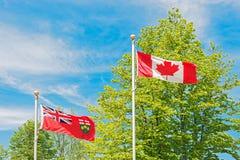 Bandiera di Ontario e del canadese, alberi e cielo ai precedenti Immagine Stock Libera da Diritti