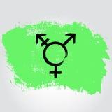 Bandiera di orgoglio del transessuale di Israele sotto forma del colpo della spazzola con il tra Immagini Stock