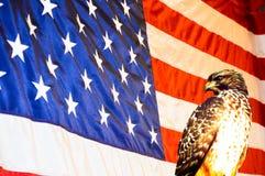 Bandiera di U.S.A. con l'uccello dell'aquila Fotografia Stock