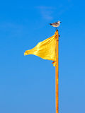 Bandiera gialla e un gabbiano Immagini Stock