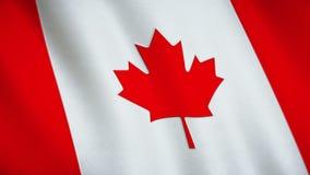 Bandiera nazionale del Canada video d archivio