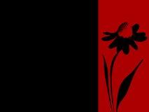Bandiera o cartolina timbrata dell'annuncio della margherita Fotografie Stock