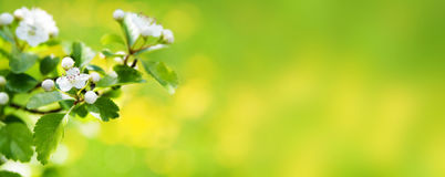 Bandiera o intestazione di Web del fiore della natura della sorgente. fotografia stock