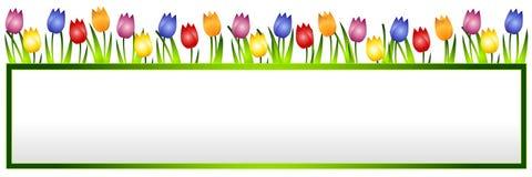 Bandiera o marchio del fiore dei tulipani della sorgente Fotografia Stock Libera da Diritti