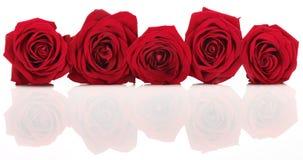 Bandiera rossa della Rosa fotografia stock libera da diritti