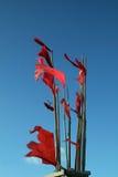 bandiera rossa di pesca Immagine Stock Libera da Diritti